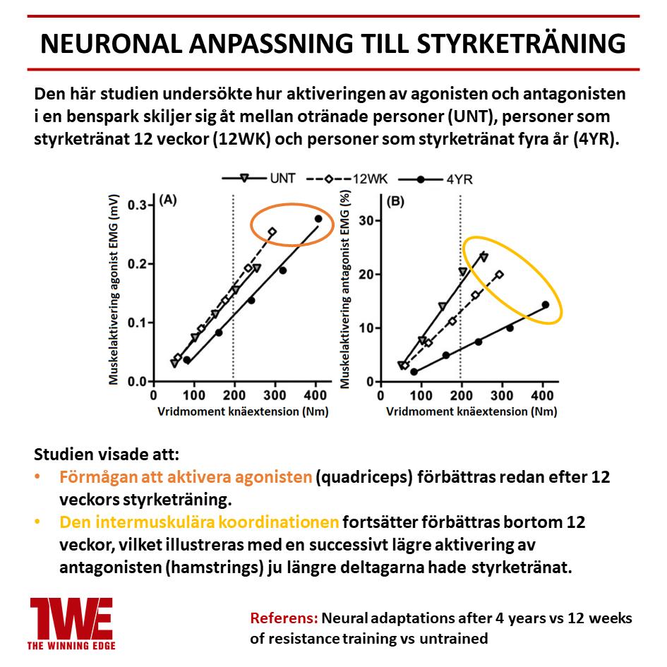 Neuronal anpassning till styrketräning