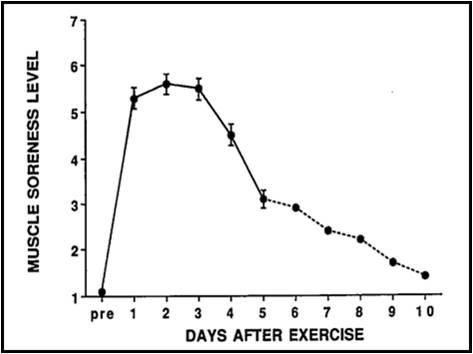 Stretching – Del 3 – Stretching och träningsvärk